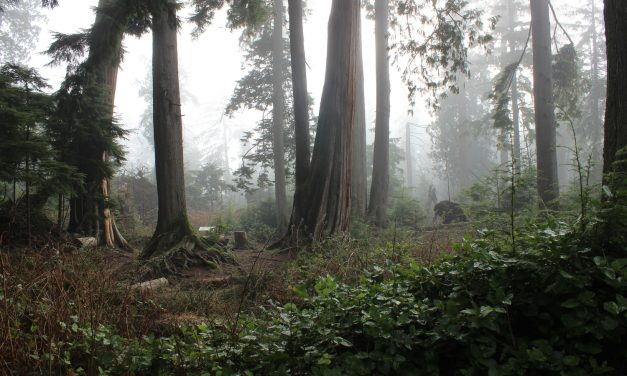 10-Year Ecological Study on Stanley Park to Be Released