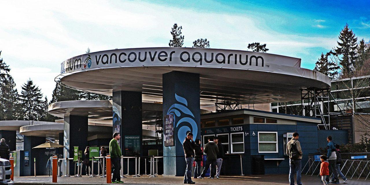 Vancouver Aquarium Sold to US Tourist Attraction Company